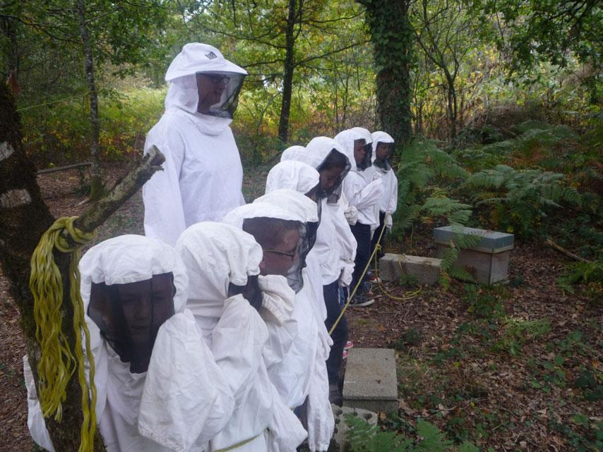 Les abeilles (1)