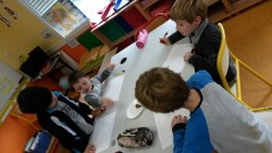 Etude des escargots (3)