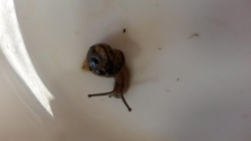 Escargot (2)